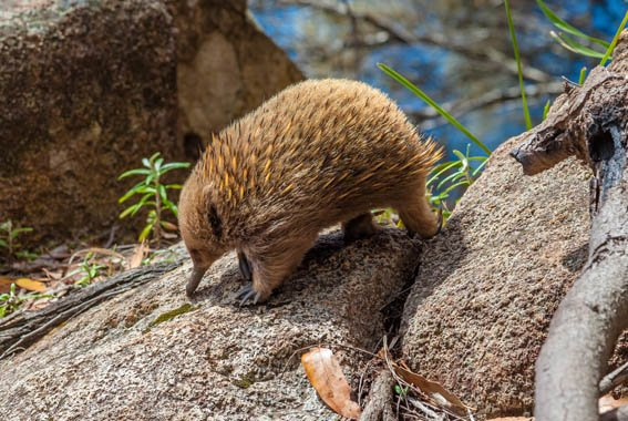 Bruny Island walk Tasmania