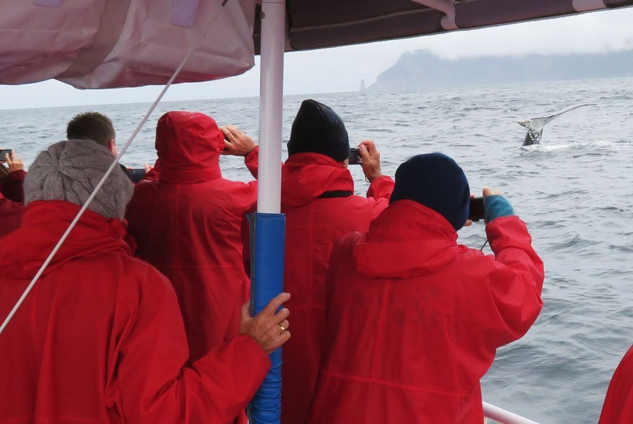 Day 3 Wilderness Cruise