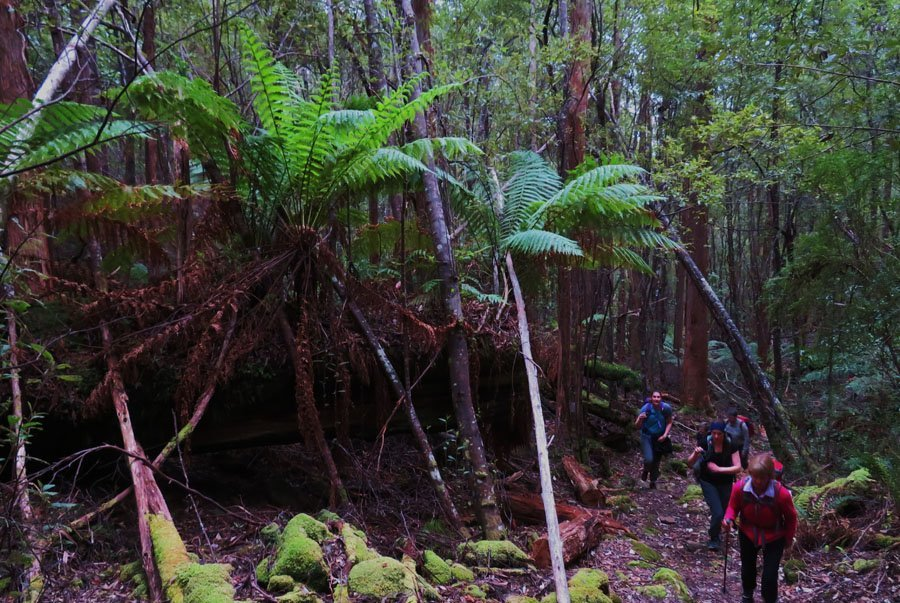 Explore the rainfores