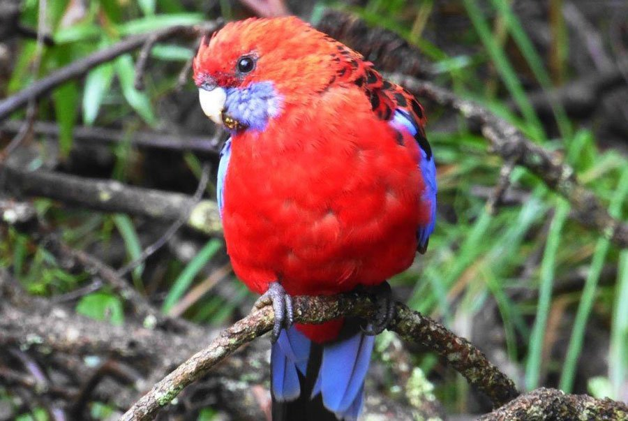 See the local flora and Fauna of the Blue Mountains