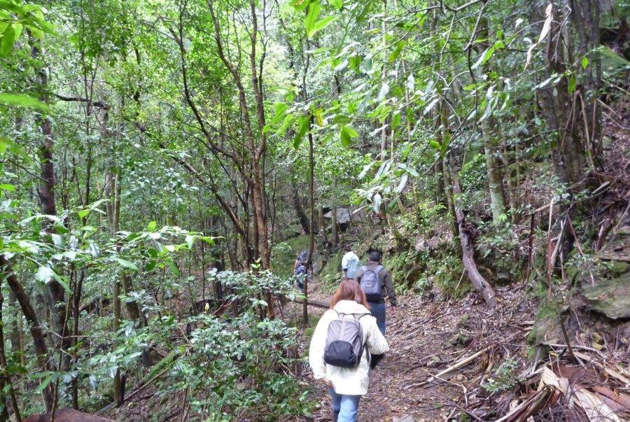 Blue Mountains Walking Tour