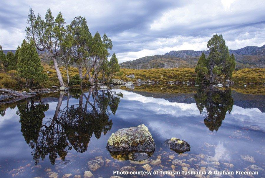 Charming Wombat Pool