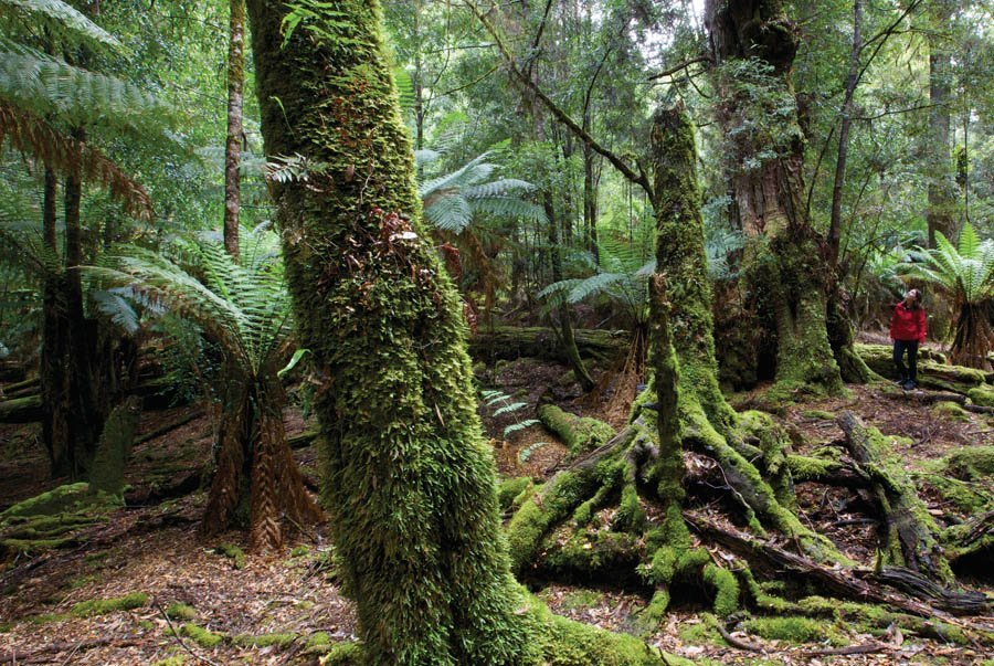 Tarkine Wilderness walk