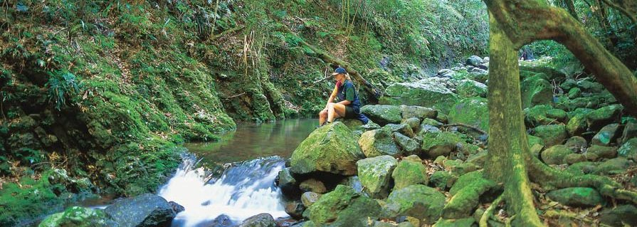 Gold Coast Hinterland Traverse walk