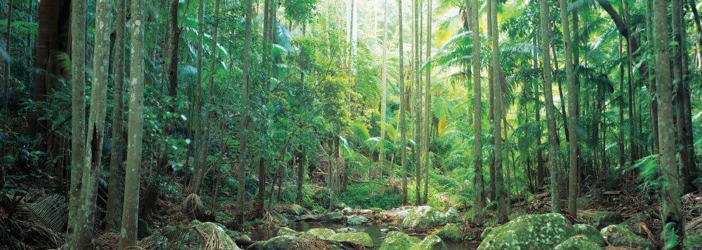 Gold Coast Hinterland Traverse walk