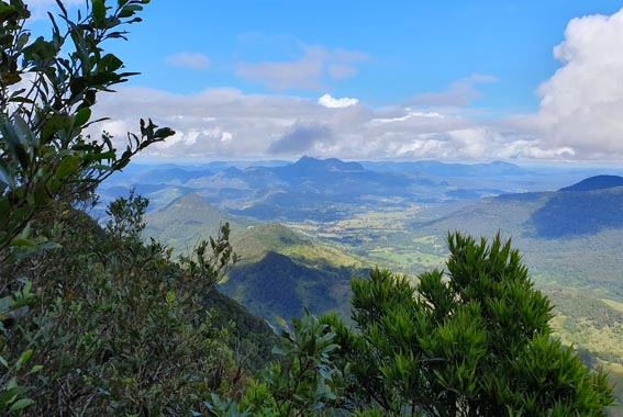 Gold Coast Hinterland Walk Queensland
