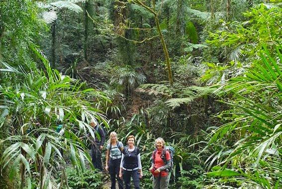 Gold Coast Hinterland Walk Queensland