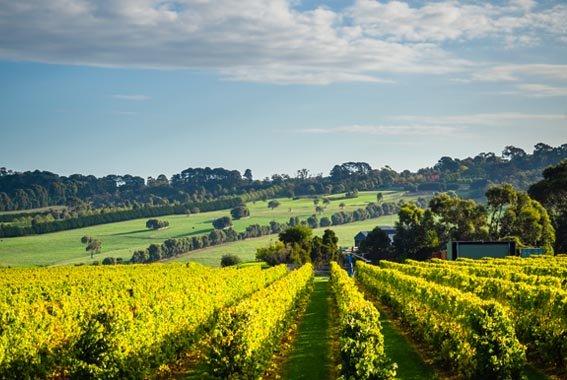 Mornington-Peninsula-guided-walk-Victoria