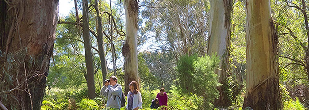 3 Day Mornington Peninsula walk