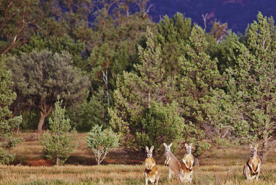 5 Day Flinders Ranges walk