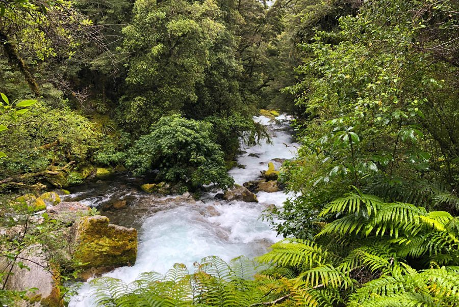 The spectacular rainforest of the Hollyford Track walk