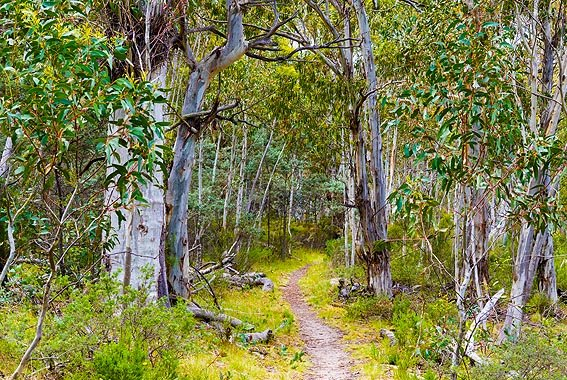 Kosciuszko-National-Park-walk-Snowy-Mountains-NSW