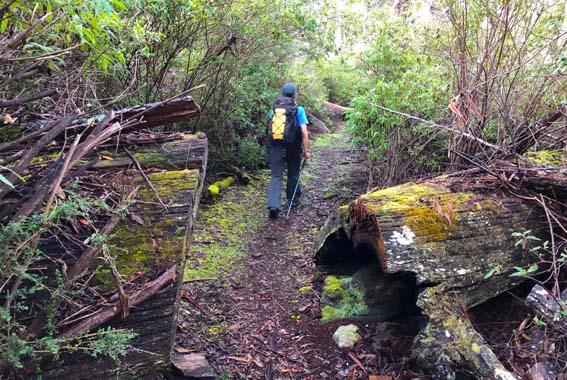 Self Guided Maria Island Pack-Free Walk