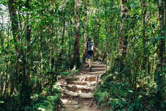 Tropics World Heritagewalk